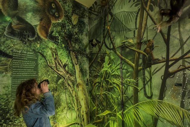 tentoonstellingsontwerper natuurmuseum _ 05