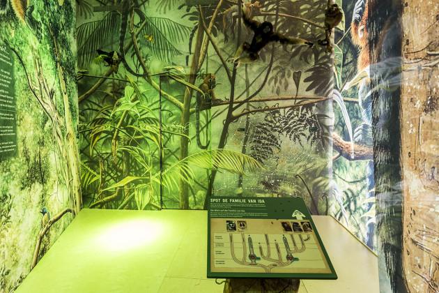 tentoonstellingsontwerper natuurmuseum _ 04