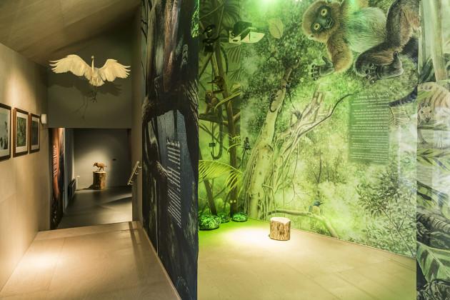 tentoonstellingsontwerper natuurmuseum _ 06