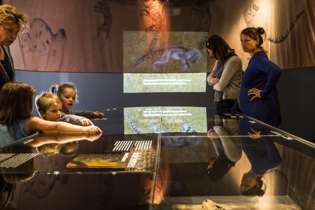 tentoonstellingsontwerper natuurmuseum _ 09