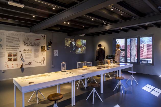 tentoonstellingsontwerper natuurmuseum _ 11